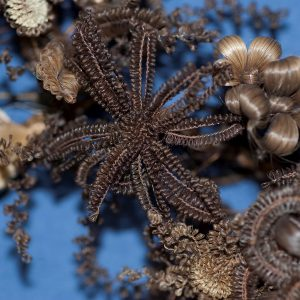 Detail of a hairwork showing an elaborately looped flower made of brown hair.